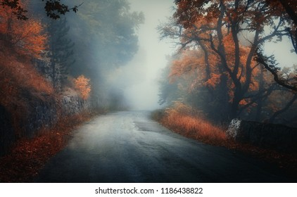 Dark autumn forest with rural road in fog at dusk. Fall trees with orange foliage. Landscape with woods, mountain road, colorful leaves, and mist. Travel. Nature background. Magical foggy forest