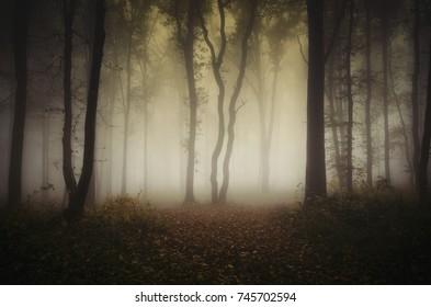 dark autumn woods background