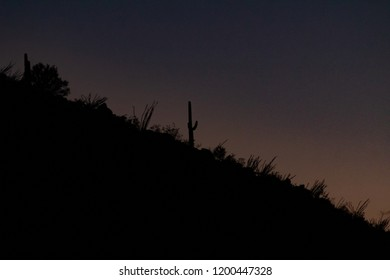 A dark background featuring an evening sky at dusk and a ridge of black silhouettes featuring various plants of the Sonoran Desert including saguaro cactus and ocotillo. Tucson, Arizona. October 2018.