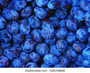 Dark background of ripe plums. Fresh blue and violet plums