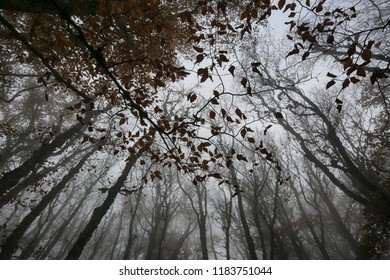 Dark background of silhouettes of the leaves of trees on the skylight of heaven