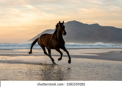 Dark Bay horse galloping in the water with the mountain in the background