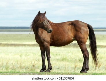 Dark bay horse grazing on a field with green grass