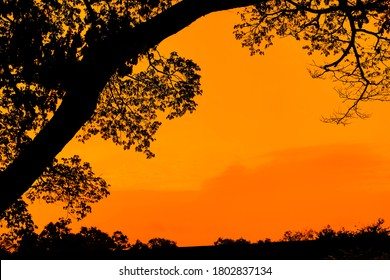 dark black brown tree trees silhouette against very early dawn morning sunrise with vivid colors of blue red orange yellow and white from low angle with tall trees new Hampshire
