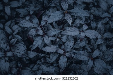 Dark Black leaves background