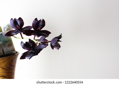 Royalty Free Black Orchid Stock Images Photos Vectors Shutterstock