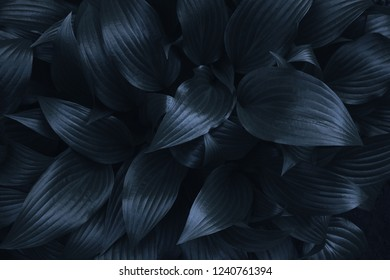 Dark blue background or texture of natural striped leaves lit by moonlight.
