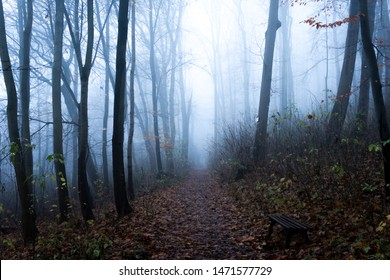 Dark blue forest, and a small Hiking trail