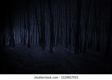 dark blue horror forest with light  - Shutterstock ID 1529857925