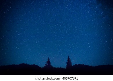 Dark blue night sky above the mistery forest with pine trees