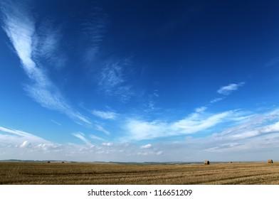 dark blue sky and yellow autumn field