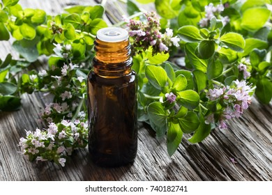 A dark bottle of oregano essential oil with blooming oregano twigs on a wooden background