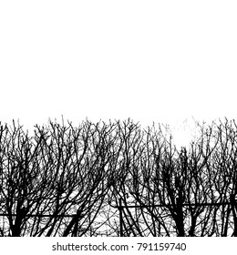 Dark branches against the white background