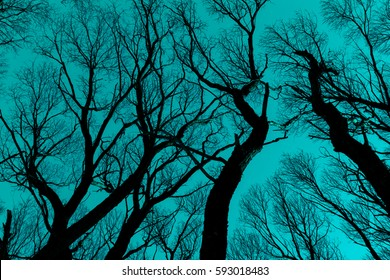 Dark branches silhouette against cyan sky. Background