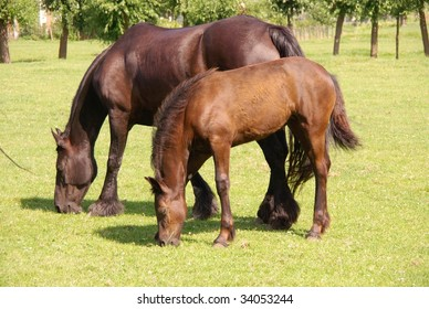 A dark brown horse with a foal