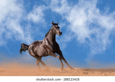 Dark brown horse galloping against blue sky