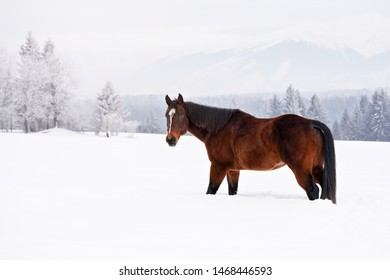 Dark brown horse on snow covered field, blurred trees in background, view from side