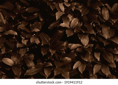 Dark and brown leaves background in nightfall as the abstract foliage textured and dusk leaf background - Shutterstock ID 1919411912
