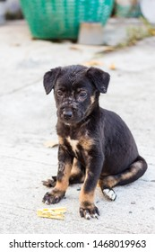 The dark brown mixed breed stray dog with spotted face like scar or skin disease sitting on the cement ground with yellow clothespin, looking at the something interesting.