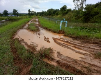 a dark brown pathway with a big muddy hole of swamp after it rain heavily showing the difficult of people in transportation in rural in rainy season. but at least both side of road is green.