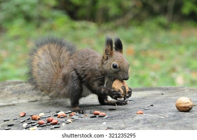 Barking Squirrel Images, Stock Photos & Vectors | Shutterstock