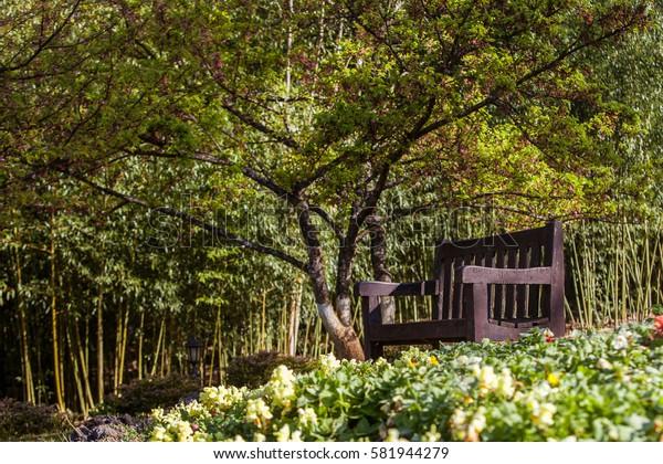 Dark brown wood chair in the green garden