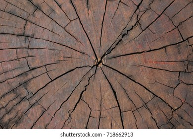 Dark brown wood circle of temple,close up.