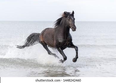 Black Beauty Horse Images, Stock Photos & Vectors | Shutterstock