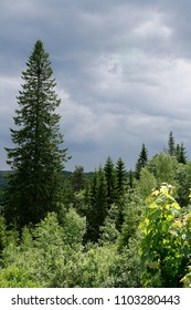 Dark clouds over a forest in spring