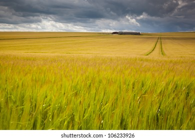 Dark clouds over wheat field. Taken using slow shutter speed to show movement of wheat.