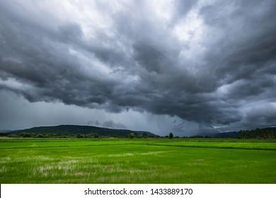 Nuages sombres et tempête de pluie au-dessus du champ de riz, saison des pluies en Thaïlande