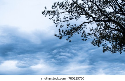 dark clouds with silhouette tree