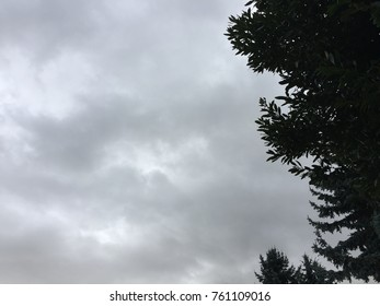 Dark clouds sky and silhouette tree background