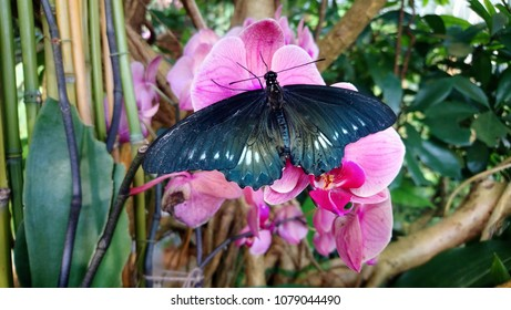 Dark colour butterfly closeup on pink orchids flowers.
