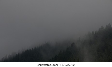 Dark coniferous forest with mist. Firs, larches.  Styria mountains, Austria
