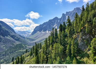 Dark coniferous taiga on mountainside in July. Valley Arzhan-Khem. Tuva. Central Asia
