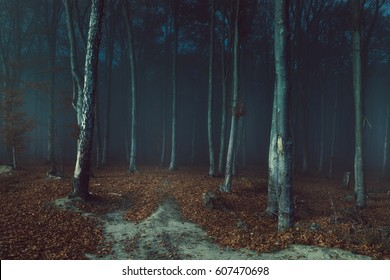 Dark creepy fog in the forest