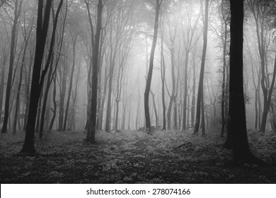 Scary Forest Images, Stock Photos & Vectors | Shutterstock