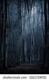 Dark Creepy Forest At Night With Moon Shining