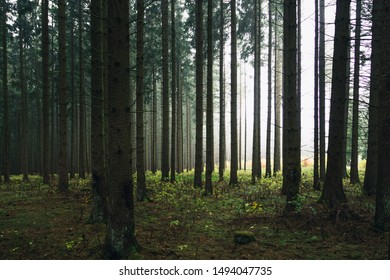 Dark creepy forest stands in a clearing