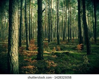 Dark, dense forest (old trees)