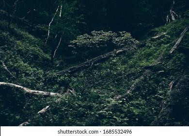 Dark dense natural forest at dusk