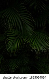Dark, dense Palm tree forests