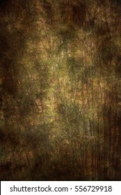 Dark and dramatic natural style background or backdrop with trees.