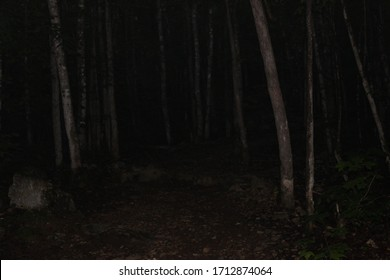 Dark and eerie forest in the early morning