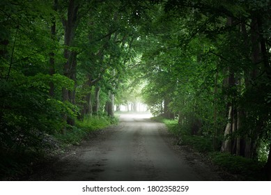Dark empty mysterious alley (single lane rural road) through the green deciduous trees. Latvia. Idyllic landscape. Natural tunnel. Bicycle, sport, nordic walking, eco tourism, environment