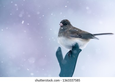 Dark eyed junco bird perched. Close up with soft focus snow in background.