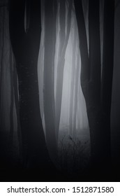dark fantasy forest background, scary woods at night