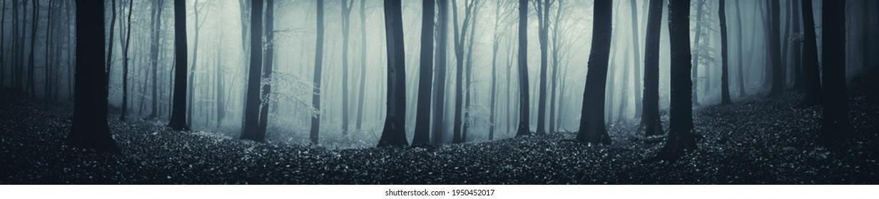 dark fantasy forest panorama, high resolution