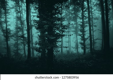 dark fantasy mysterious forest landscape, trees in fog in scary woods